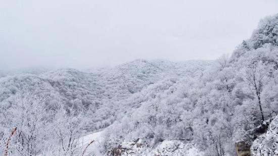 栾川冬游季正式启动!竹海野生动物园等景区2021活动更精彩!