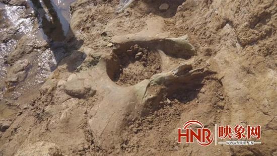 汝州市温泉镇河道发现古象盆骨化石