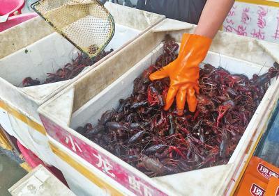 郑州市场上的鲜活小龙虾