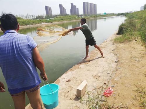 寻找下酒菜 郑州男子瞄上了贾鲁河里的鱼
