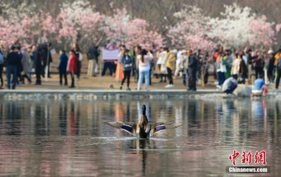 资料图:北京春天景色。中新社记者 杜洋 摄