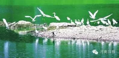 湿地公园面积710h㎡;湿地类型:河流;所在地:汤阴县。