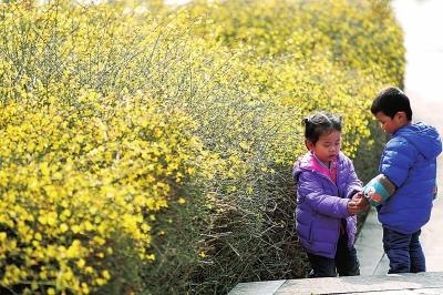 大河报·大河客户端记者刘瑞朝文洪波摄影