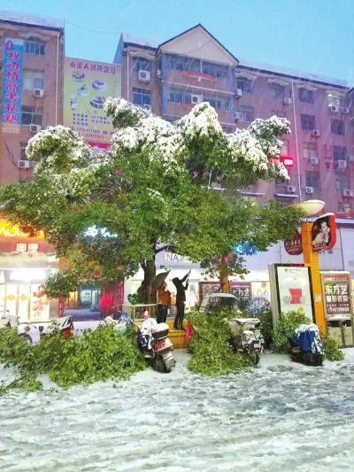 雪压断了一些树枝,几辆电动车被砸。