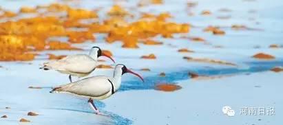 湿地公园面积4,222h㎡;湿地类型:人工、河流;所在地:嵩县。