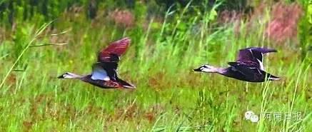 湿地公园面积676h㎡;湿地类型:河流;所在地:唐河县。
