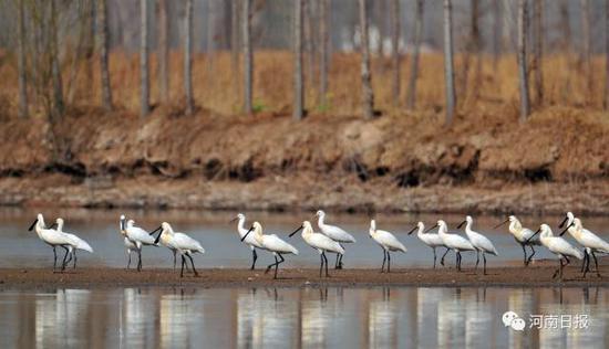 湿地公园面积1,359h㎡;湿地类型:河流。
