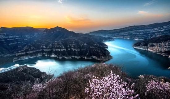 在河南山西中间黄河中下游有这么一个地方,有一片满山遍野的桃花。
