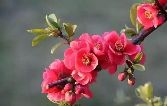 风景区,作为开封菊展的主会场,龙亭公园还有一处梅园,冬日满园的梅花