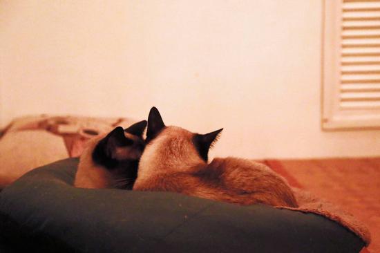 其他猫都很可爱,