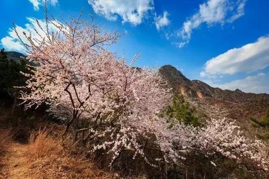活动名称:秋沟山桃花节