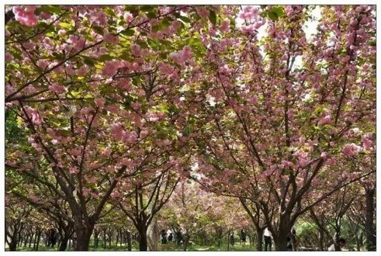 地址:郑州市绿博园,市内可乘坐568路、573路公交到达。