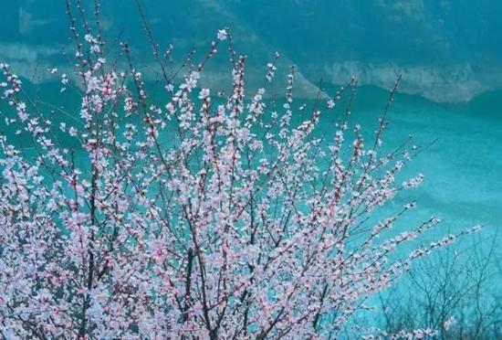 景区名称:黄河三峡景区