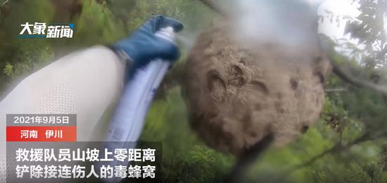 伊川毒蜂蜇伤3人1人致命 救援队零距离铲除毒蜂窝