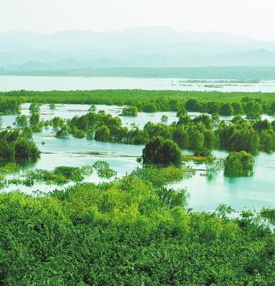淅川丹江湿地绿树摇曳.河南日报 资料图片