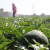 初夏时节,农民抢抓农?#20445;?#30000;间地头都是辛勤忙碌的身影