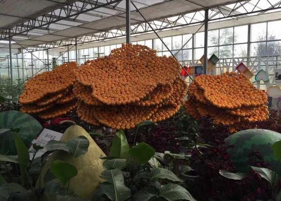 第十九届中国农产品加工业投资贸易洽谈会9月6日将在驻马店市隆重举行,橄榄球僵尸