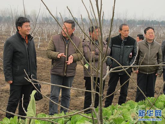 陈召起带领高白玉村两委班子成员和村民代表到邓州市参观考察学习核桃树立体种植。