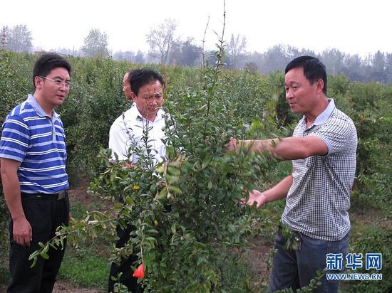 陈召起带领高白玉村两委班子成员和村民代表参观学习无籽石榴种植。