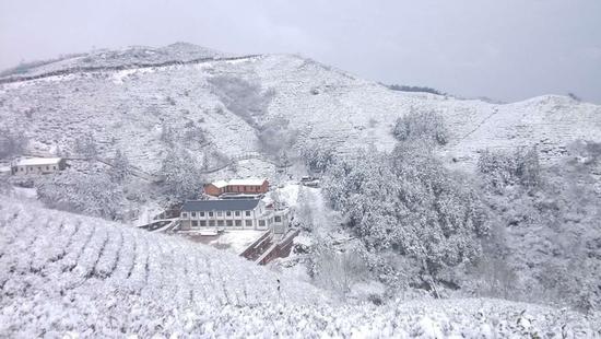 雪后的茶山