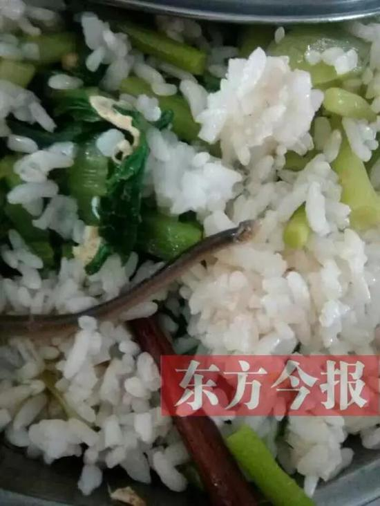 """关于对""""光山一高饭菜中吃出蚯蚓""""校方回应"""