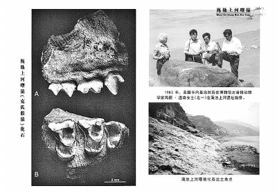 发现    渑池上河曙猿(克氏假猿)化石