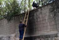 游客翻墙进野生动物园