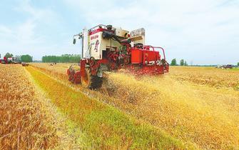 今年麦收开始 全省已收获188万亩