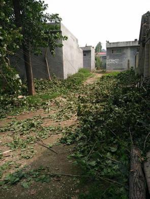 平顶山一村庄遭狂风暴雨 电线杆被刮断
