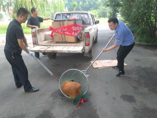 三只流浪狗闯进办公楼 执法队员擒获妥善安置