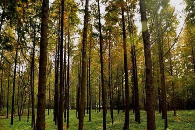 """森林火灾进入高发期 河南对森林防火不力市县""""亮剑"""""""