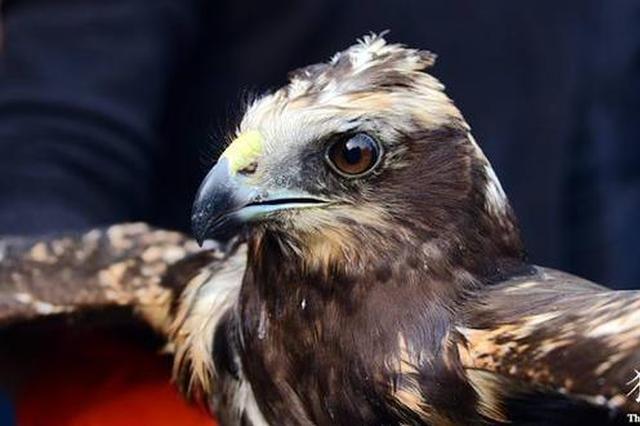 """郑州小孩捡只""""大鸟""""遛弯玩 竟是国家重点保护动物"""