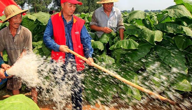 夏种工作结束 郑州播种秋作物285.26万亩