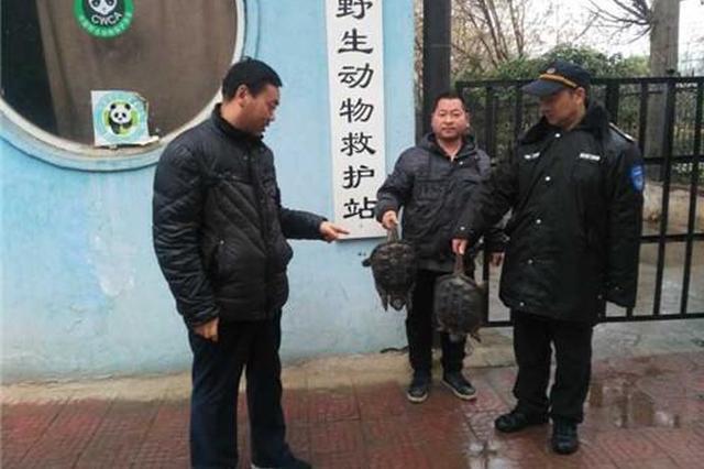 """郑州女子买两只""""神龟""""放生被阻止 原因是这(图)"""