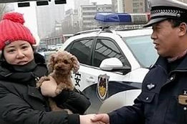 狗狗听到主人呼唤狂叫不止 郑州女子扫街找到丢失9天爱犬