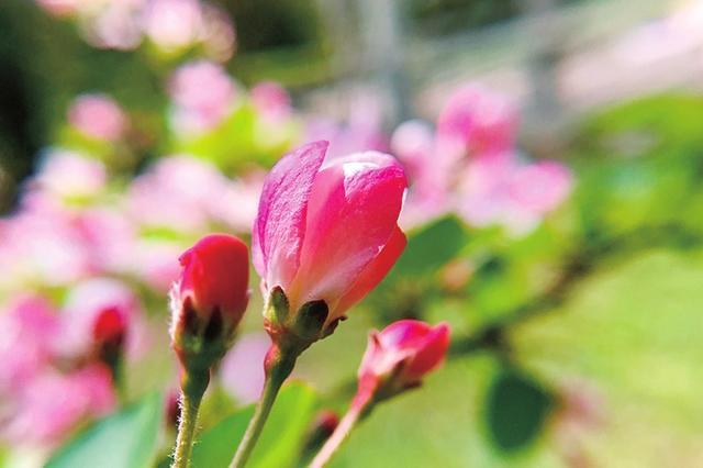 郑州百花烂漫 踏着春天尽享诗