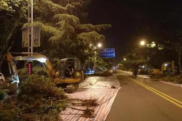 漯河这条路要升级改造绿化带 晚上部分路段会封闭