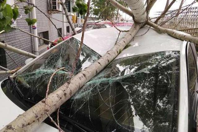 漯河一小区栅栏外大树砸伤三辆车 索赔成难题