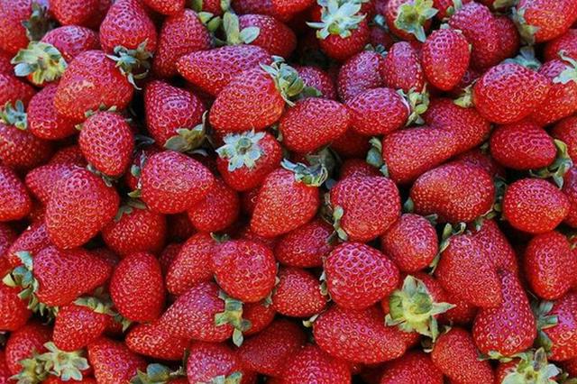 """气温升高 郑州市场草莓甜瓜""""身价""""开始打对折"""