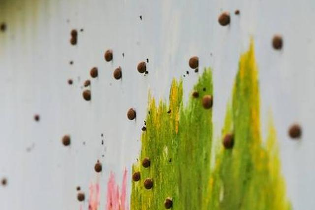 """郑州金水河畔上万只蜗牛""""大迁移"""" 密密麻麻爬满树墙"""