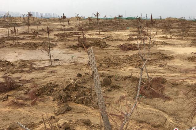 堆有十几米高的弃土含禁用农药 新郑龙湖镇称已立案