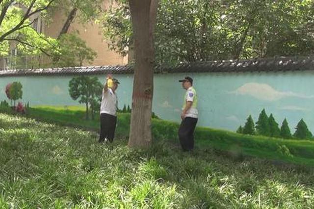 郑州滨河公园国槐遭害虫侵袭 叶子几乎被吃光