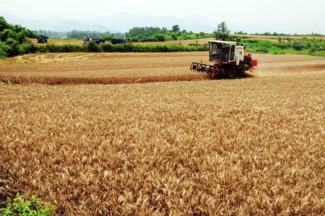 河南麦收基本结束 12天收割8192万亩创新纪录