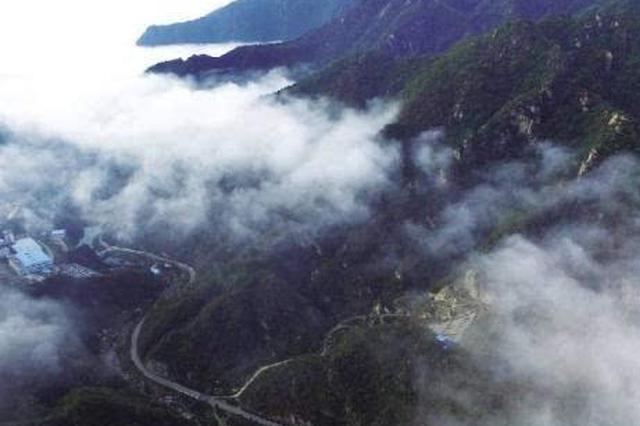 河南利用外资造林747万余亩 提高林木覆盖率2.7%
