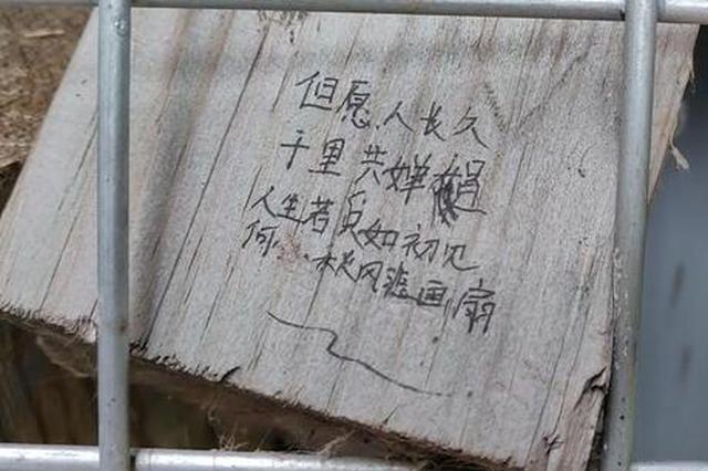 """郑州龙子湖畔木块墙被妙手""""涂鸦""""成表白墙"""
