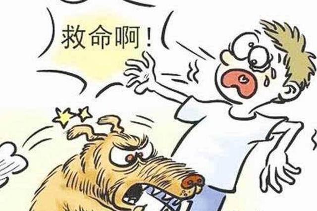 漯河一条疯狗到处咬人 特警紧急出动一枪击毙