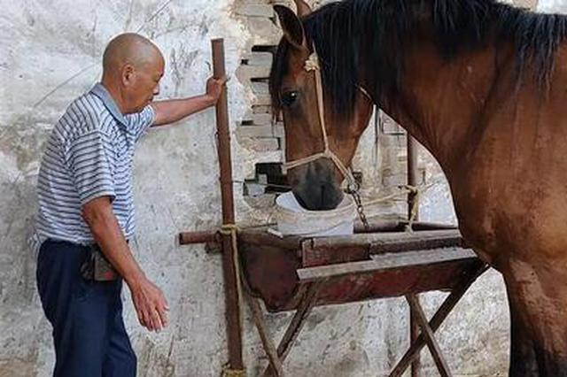 郑州一大爷养马当宠物 上街遛马引市民合影