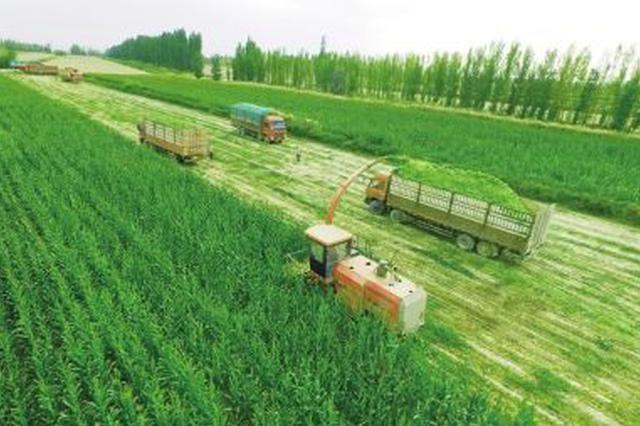 河南56个县区实施粮改饲 时间为7月1日至12月31日