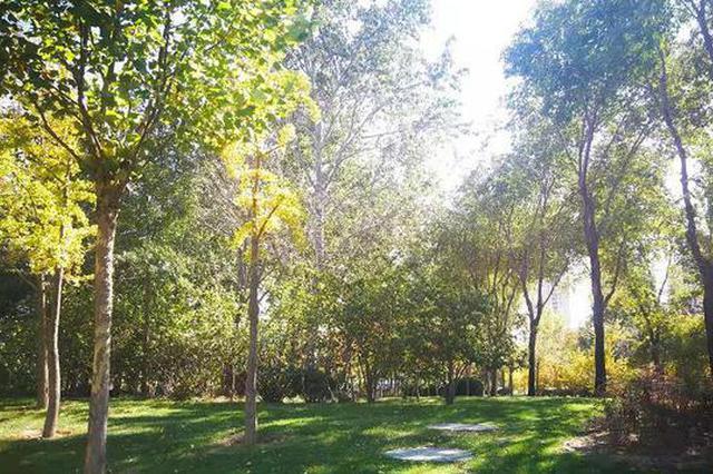 郑州生态园林城市再加速 明年6月底前完成提升整改