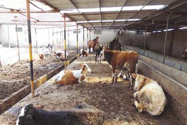 中央财政支持畜禽粪污资源化利用 河南9个县可申报